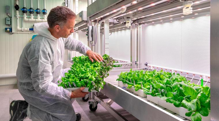 Co-creatie BASF en Universiteit Maastricht met groenteteelt op Brightlands Campus Greenport Venlo